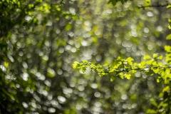 Very-Green